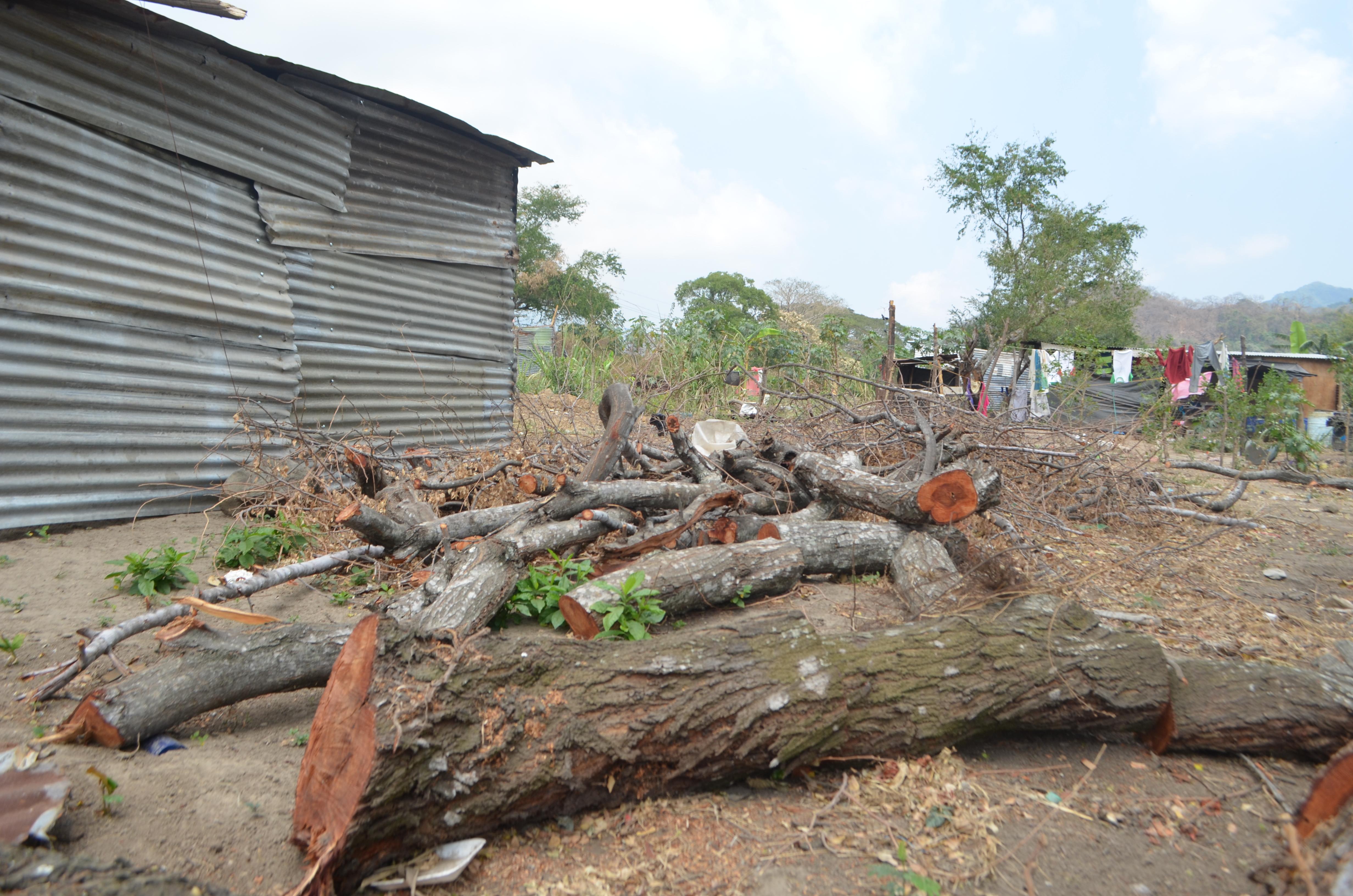 Tala ilegal de árboles de la finca realizada por los usurpadores.